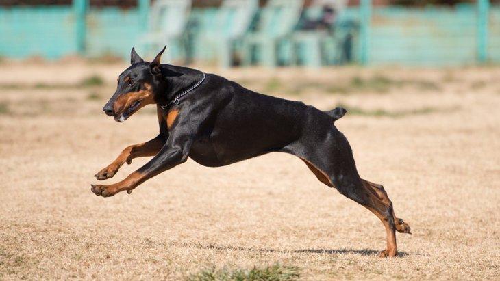 犬の筋トレ トレーニング方法から注意点まで