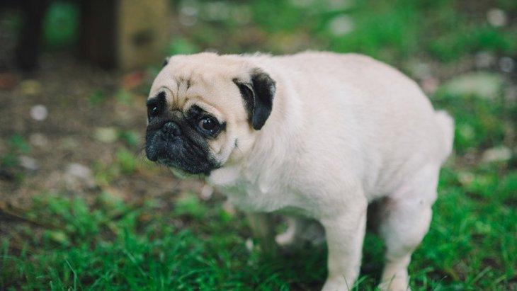 犬のオナラが異常に臭い!主な原因や改善方法について
