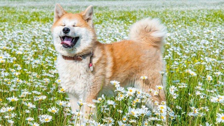 大型犬が見せる『かわいい行動』7選♡
