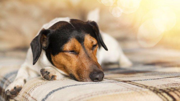 犬との暮らしはこんな感じ!犬と飼い主の1日のスケジュール