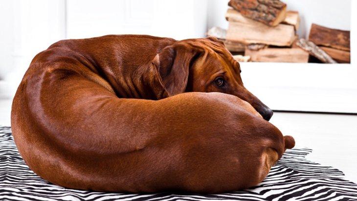 犬が構ってほしくない時に見せる3つのサイン