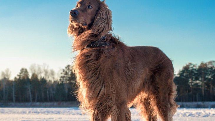 犬は犬種ごとに10のグループがある!それぞれの歴史や特徴