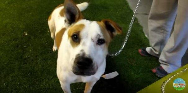 4匹いっぺんに捨てられた犬。なんとか1匹を保護するも…動画技術が!