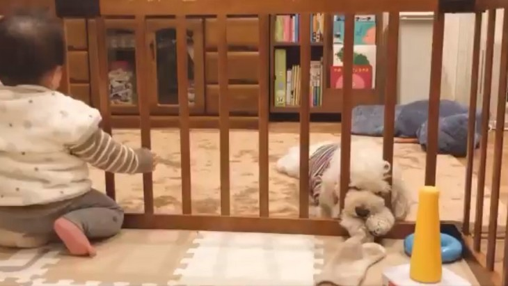 【話題】赤ちゃんの靴下奪取作戦!実行犯(犬)がまさかの寝落ち…!?