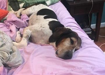 末期がんが判明した保護犬のバケットリスト