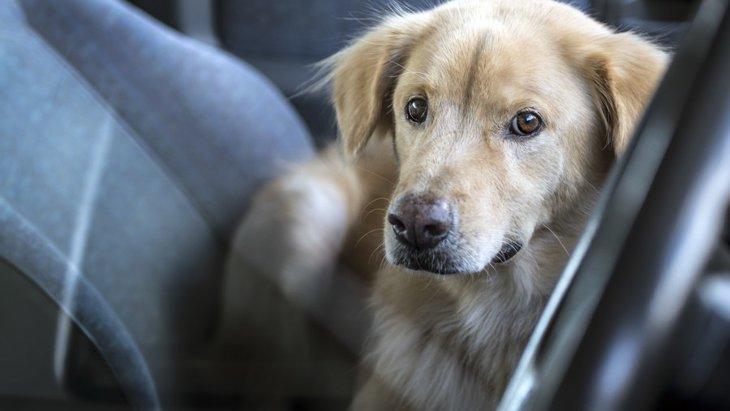 夏の車内に犬をお留守番させる危険性