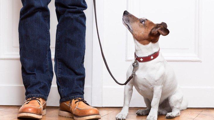 子犬のトレーニングは室内で始めよう!初めはリードをつけて特訓