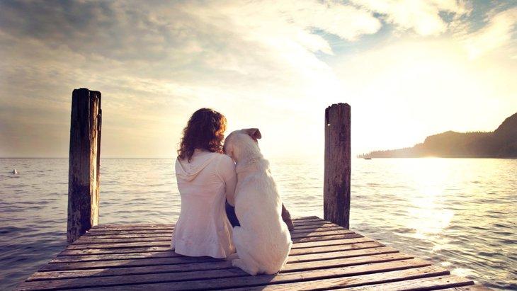 犬は『飼い主』と『他人』をどうやって判断しているの?