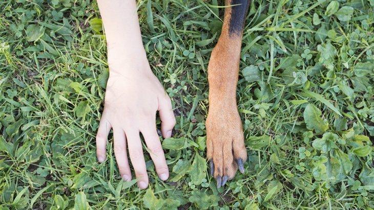 犬の爪から血が出た場合のケース別対処方法