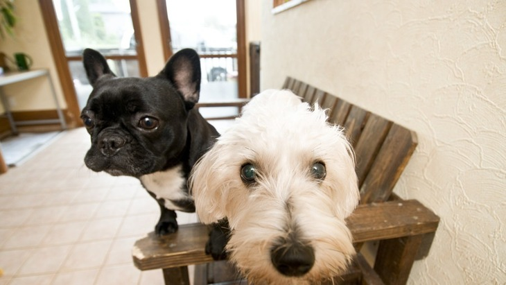 体格差のある犬を多頭飼いする時の注意点