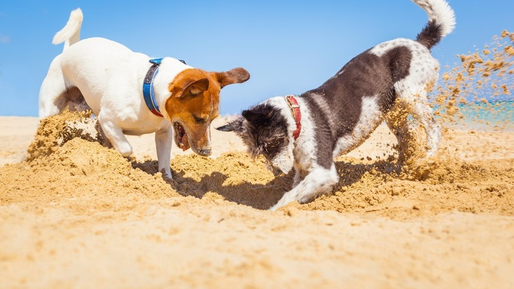 犬同士が遊ぶ2つのメリットと注意点