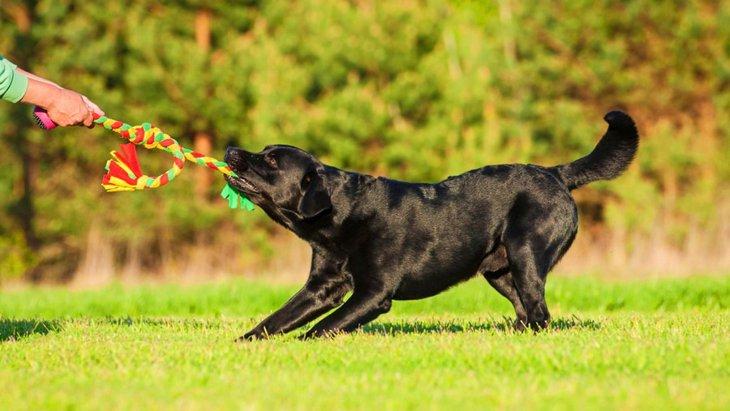 犬と「引っ張りっこ」で遊ぶ正しい方法と注意点