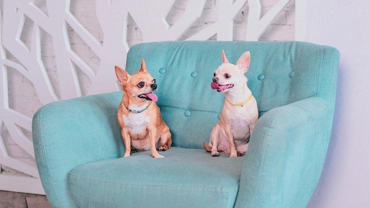 犬が骨折しやすくなる『家の環境』3選!こんな床やインテリアが愛犬に怪我をさせることも…?