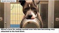 「お皿を持って離さない犬」SNSで拡散された結果、里親が決まった話