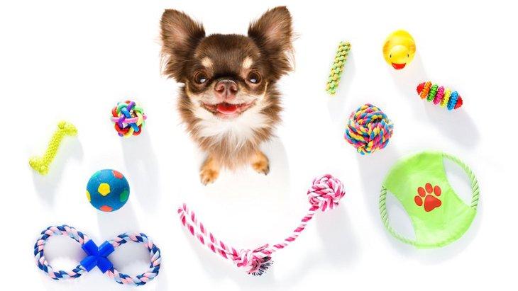 犬用おもちゃをDIYしよう!手作りおもちゃ5選