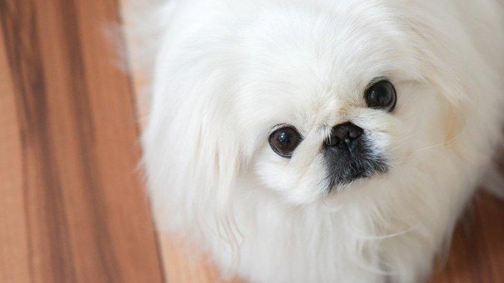 犬にするべきではない『アイコンタクトの仕方』4選