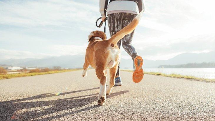 なぜ犬は散歩中に足が痛くならないの?3つの理由とやるべきケア方法