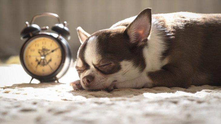 犬には『時間』がわかっている?体内時計が正確って本当?