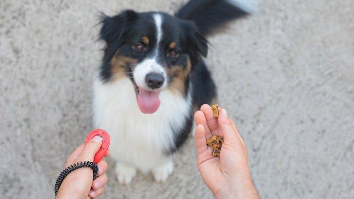 犬が外に出たがらないときの心理とは?