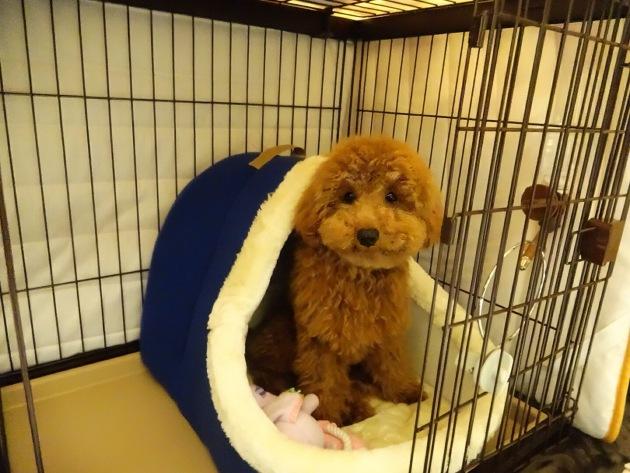 愛犬のためのペットホテル選びのノウハウ