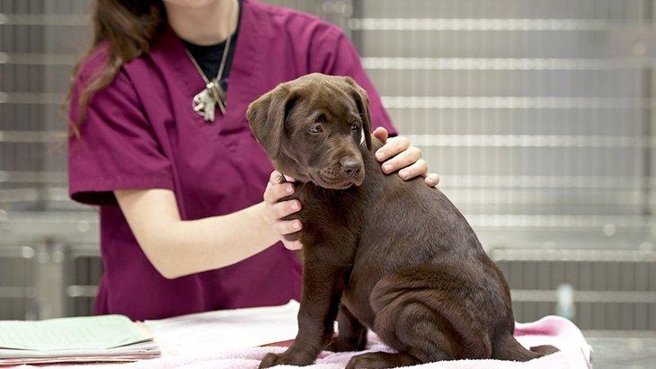 元動物看護士兼主婦さんにインタビュー!動物看護士のお仕事Q&A