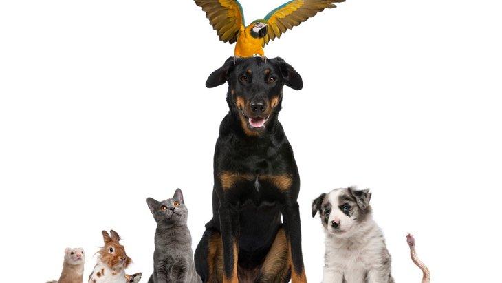 一緒に飼える♡犬が『仲良しな動物』ランキングトップ3