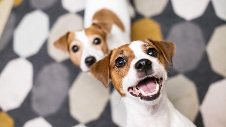 犬が飼い主を遊びに誘うときの仕草9つ