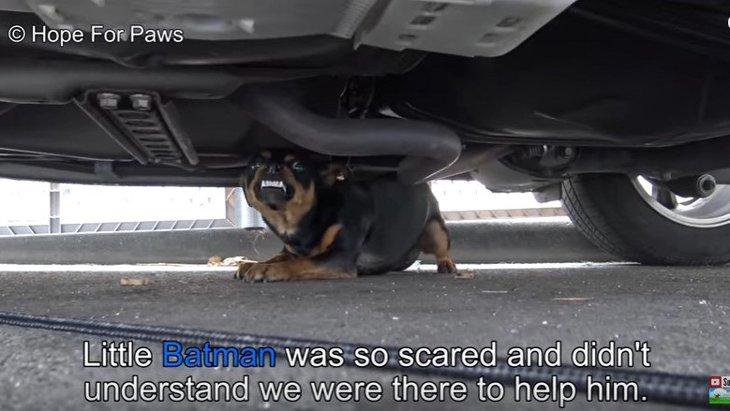 【犬の救助あるある!?】恐怖が信頼にころっと置き換わる瞬間に感動