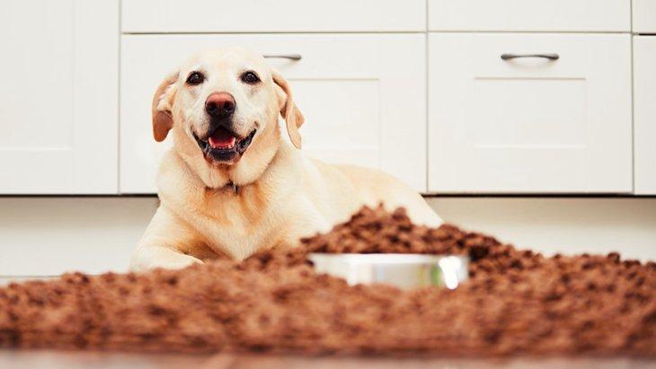その愛犬の涙やけ、フードの保存方法が原因かも?正しい保存の仕方とは?