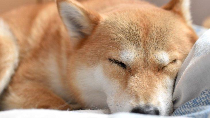 よく見るけどなんで?犬が寝る前にクルクル回る心理