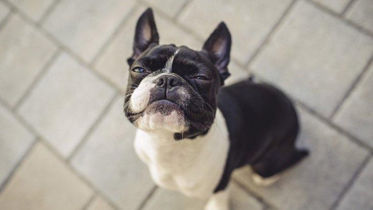 愛犬が急に飼い主を避けるようになる理由5つ
