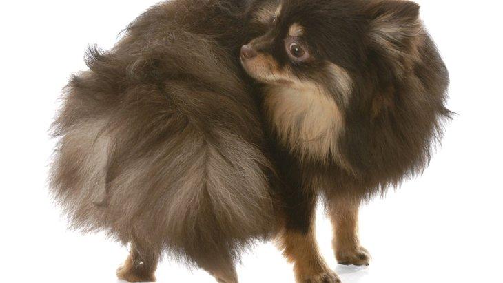 犬が『グルグル回る』5つの理由とは?病気の可能性もあるって本当?