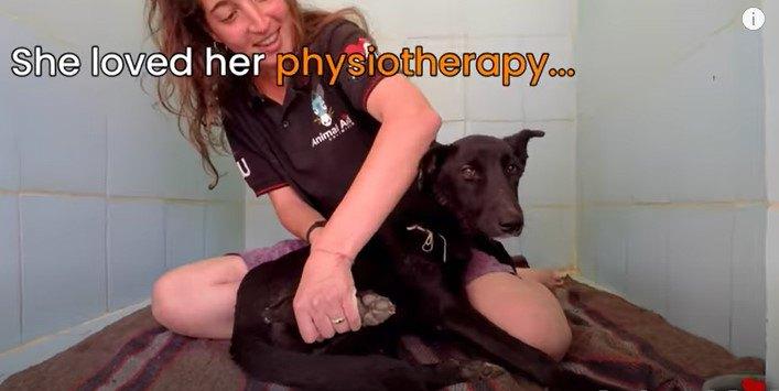 バイクと衝突し歩く事が出来ない犬をレスキュー。治療に耐え元気な姿に!