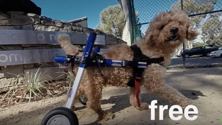 前足だけで移動する犬を保護。保護した後はカスタム車椅子で疾走!