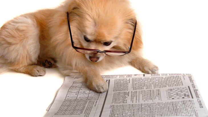 【2017年版】犬に関連する印象的なニュース3選