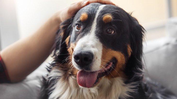 犬が飼い主のそばを離れない時の心理4選!それ、もしかしたら病気の可能性も?