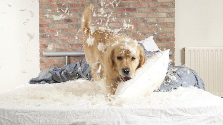 どうしたの?!犬が夜になると暴れる理由と対処法