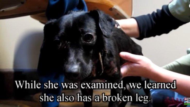 首に巻かれたヒモが食い込み感染症に…命の危機にある犬をレスキュー