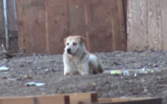 飼い主に見捨てられた孤独な犬を救助。もう一度人を信頼してくれるのか