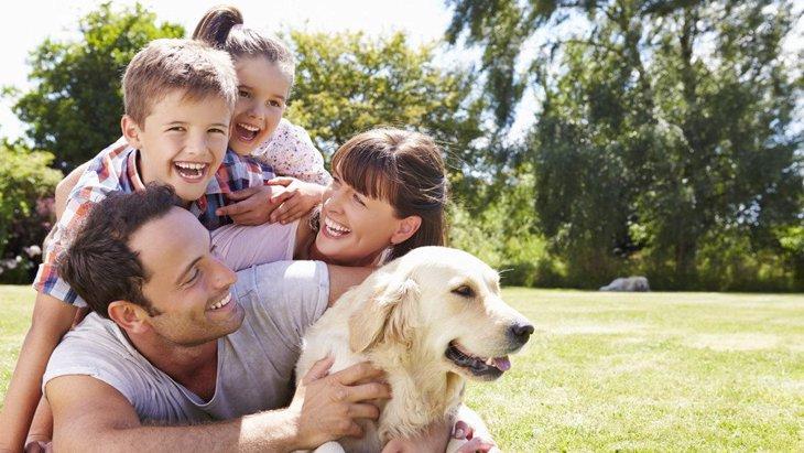 犬は家族のことをどう見ているのか?順位付けやリーダー、しつけの必要性について