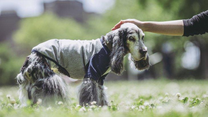 犬が『認知症』になっている時の初期症状4選!治る可能性は?進行を防ぐ生活の仕方はあるの?