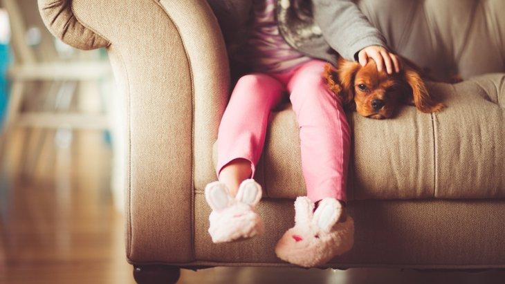 【あれ?どっか行っちゃった…】犬が飼い主のそばを離れるのは安心している証拠♪