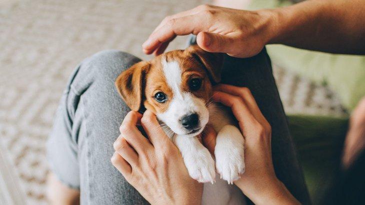 子犬のしつけで絶対にやるべきではない『4つのNG行為』