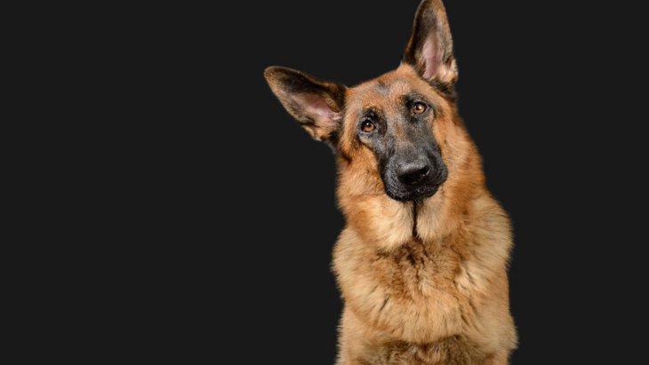 アメリカ発、ロボット盲導犬の構築が進行中!