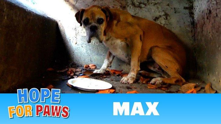 高速下の排水管に居ついた高齢犬を保護。そして結末は?