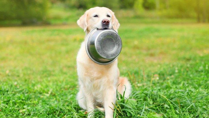 犬が満腹な時に見せる2つの仕草と満腹のチェック方法