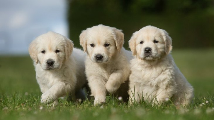 犬の幼稚園や保育園のおすすめ14選!しつけ教室やペットホテルなど