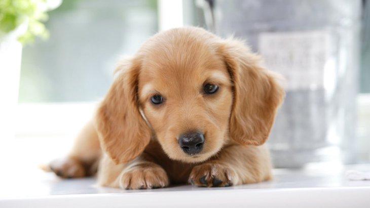 犬を飼うメリットは?お迎えする前に知っておきたい犬との暮らし