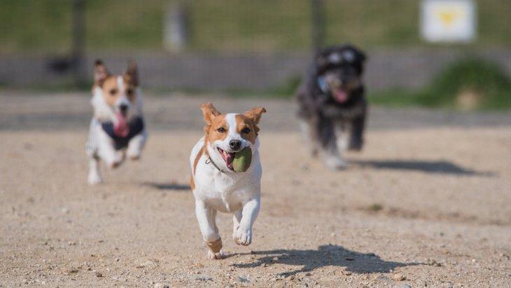 犬に必要な純粋運動量とお散歩 健康管理と心の育成について