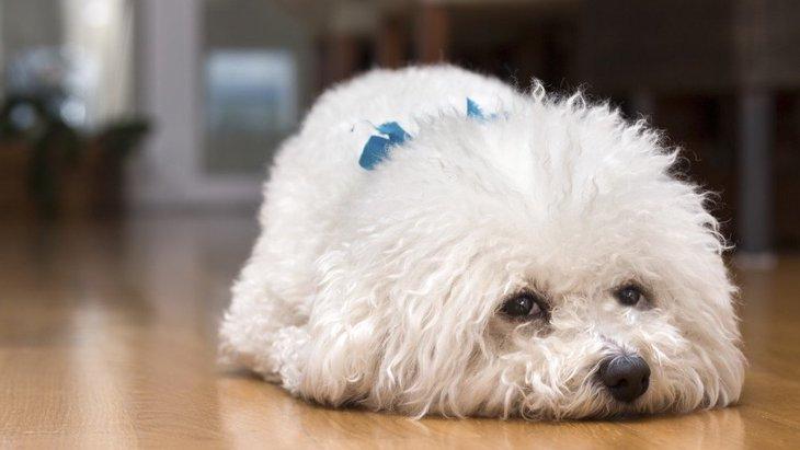 犬が『音』を怖がっている時の仕草や行動5つ